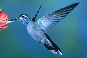 What is Google Hummingbird and what does it mean for online retail?