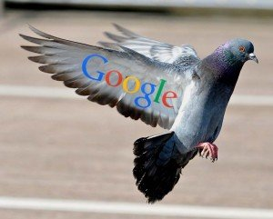 Pigeon coming in to land with wings stretched backwards representing Googles new Pigeon update landing in the UK.