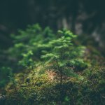 a small tree begins to grow in a dark forest