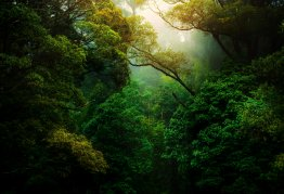 a dense green forest, with sunlight peaking through the trees